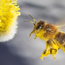 Tausende Bienen