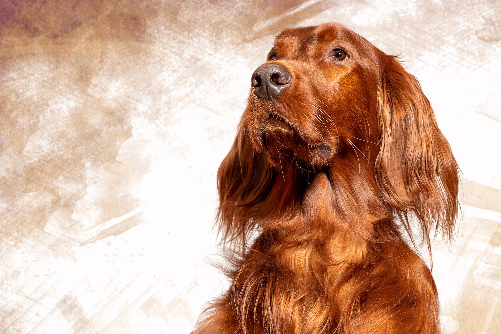 Wachhund Otto